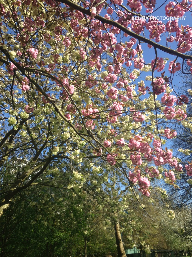 Something in the blossom of tree branches