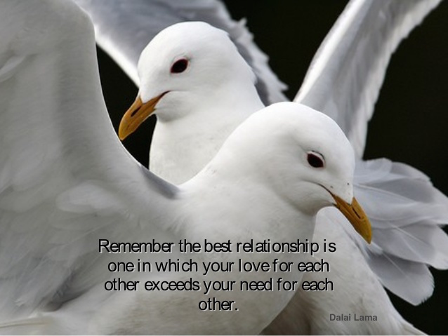 Two white seagulls and a quote from Dalai Lama